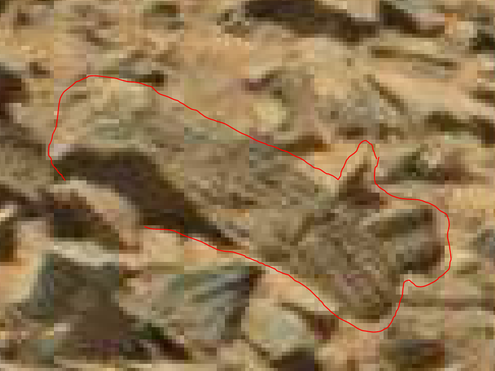 mars anomaly alien creature 3 sol 710 was life on mars