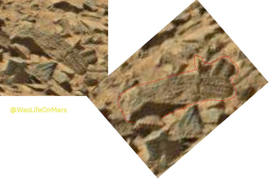 mars anomaly alien creature 3a sol 710 was life on mars