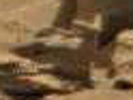mars anomaly animal statue a sol 712 was life on mars