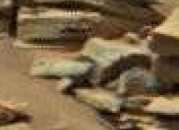 mars anomaly another turtle statue sol 710 was life on mars