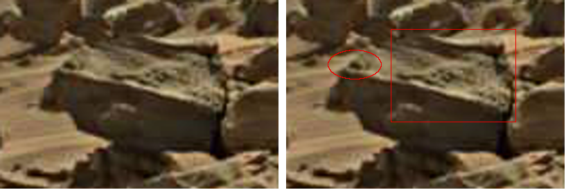 mars anomaly reptile head sol 713 was life on mars 2