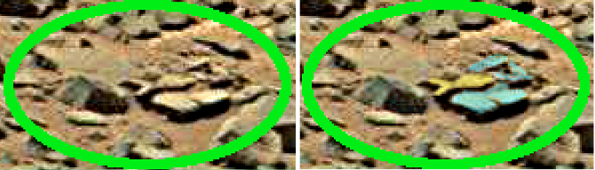mars anomaly turtle head with fish stone sol 710 was life on mars