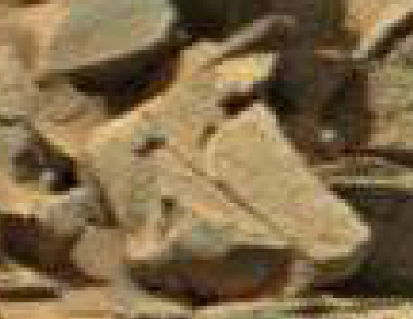 mars anomaly rock engraved sol 710 was life on mars
