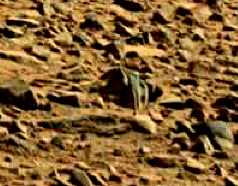 mars sol 714 anomaly artifacts 25 was life on mars
