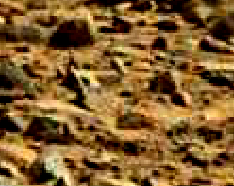 mars sol 714 anomaly artifacts 28 was life on mars
