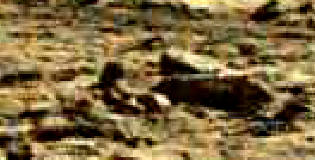 mars sol 1262 anomaly 1a-2 was life on mars