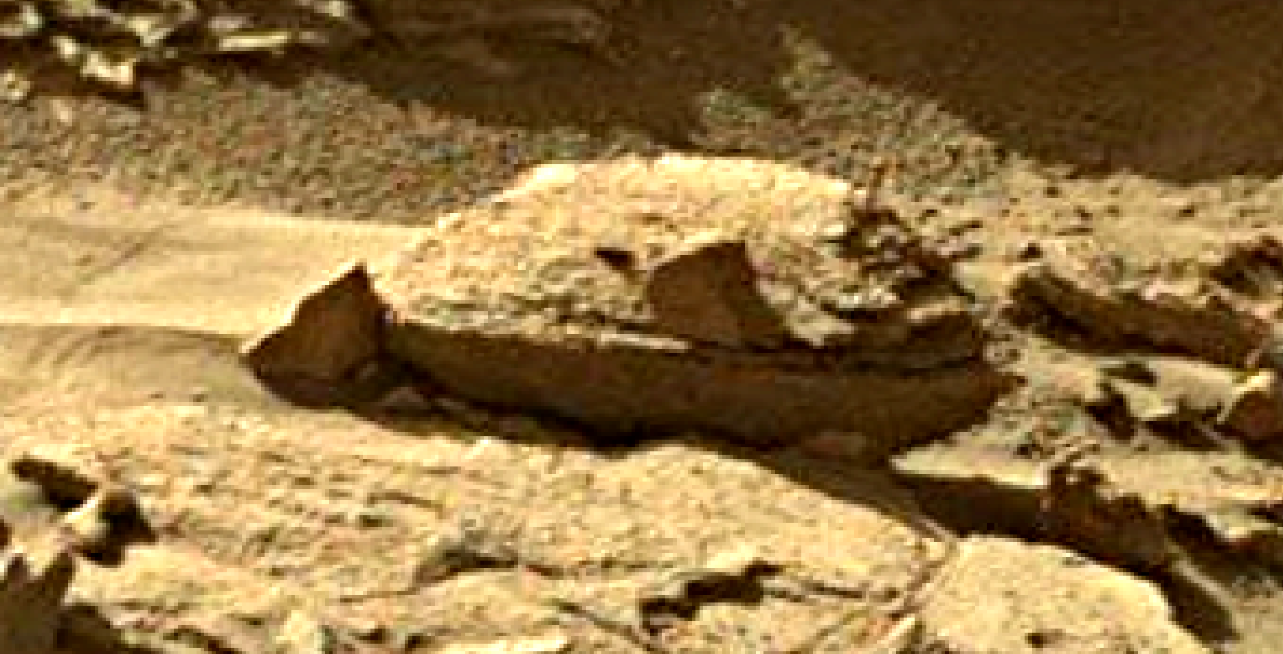 mars sol 1302 anomaly-artifacts 4 was life on mars