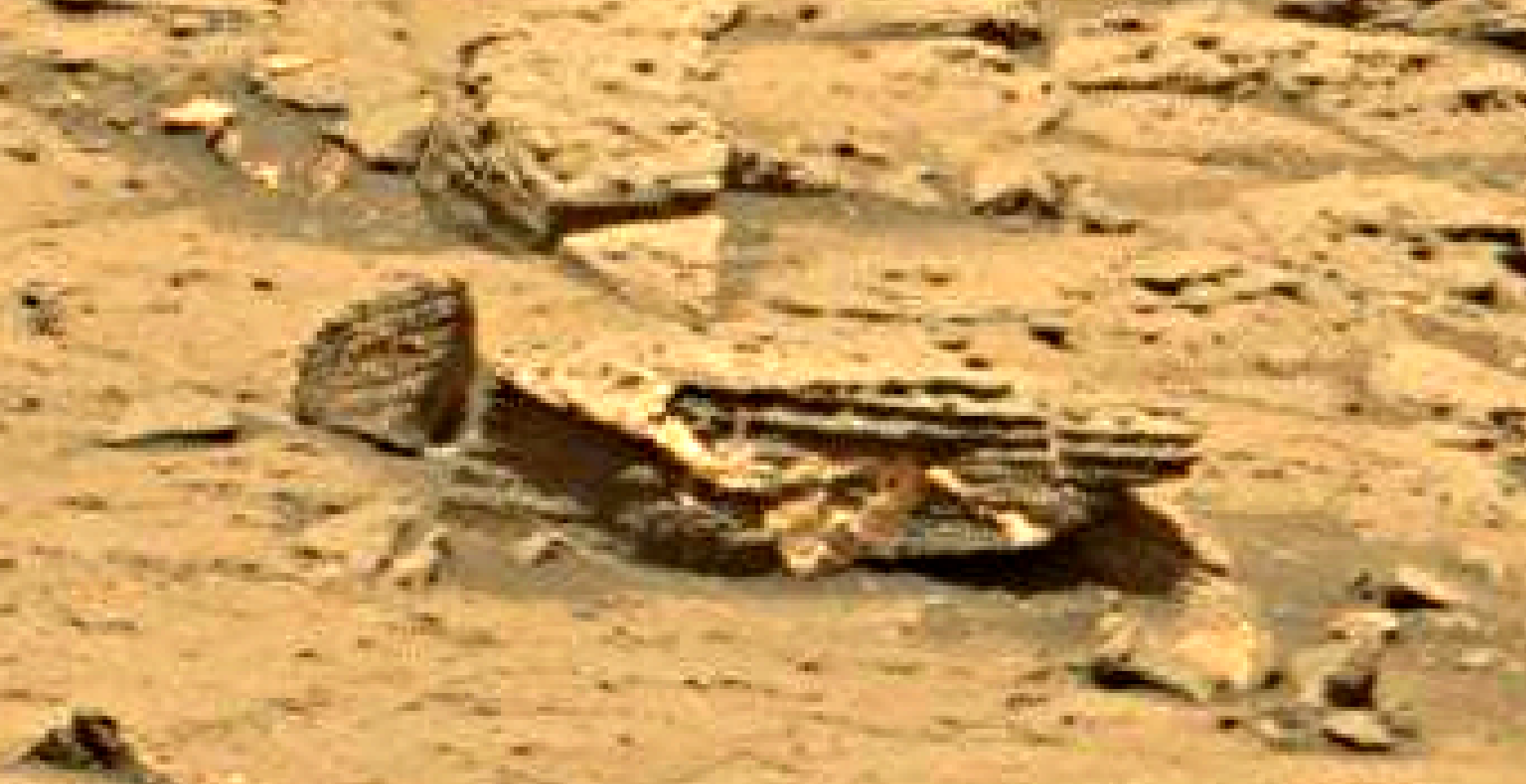 mars sol 1353 anomaly-artifacts 15 was life on mars