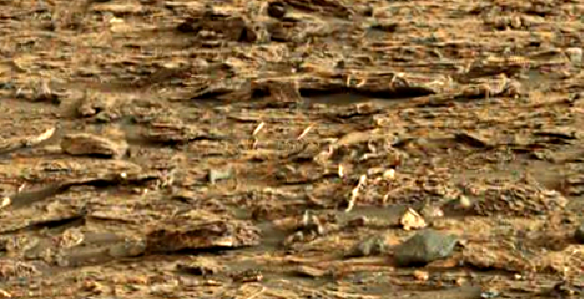 mars-sol-1448-anomaly-artifacts-22-was-life-on-mars