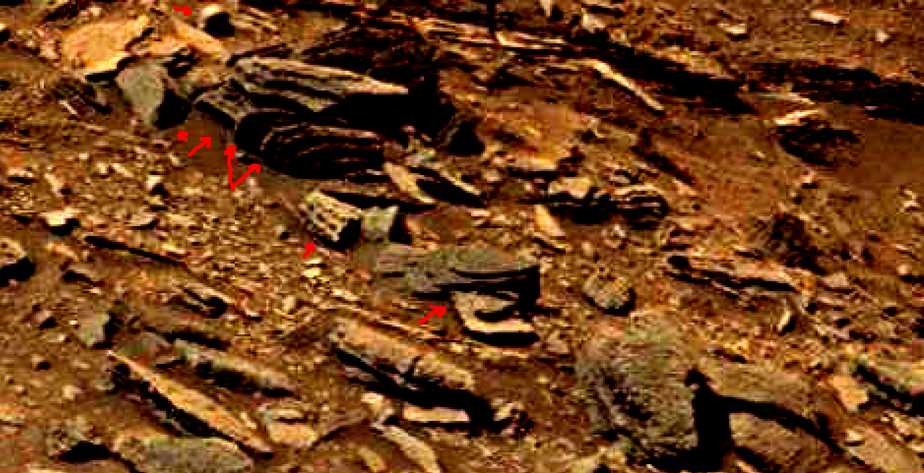 mars-sol-1463-anomaly-artifacts-23a-was-life-on-mars